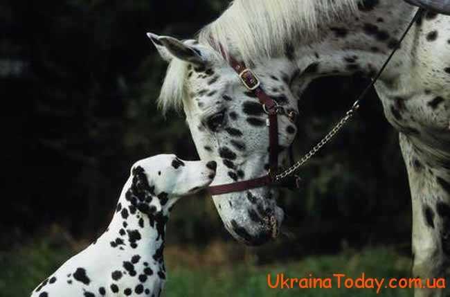 собака і кінь
