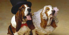 Весілля, та всі приємні клопоти
