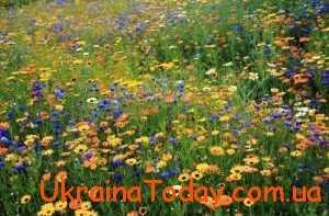 Яке буде літо 2018 в Україні