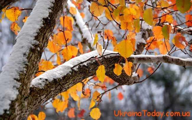 Чим здивує листопад осені