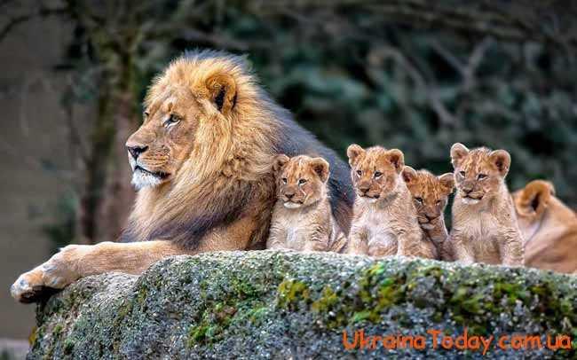 Гороскоп для Левів