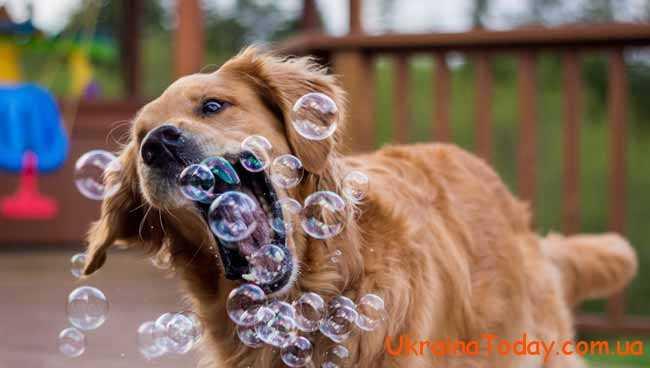 собачка грається