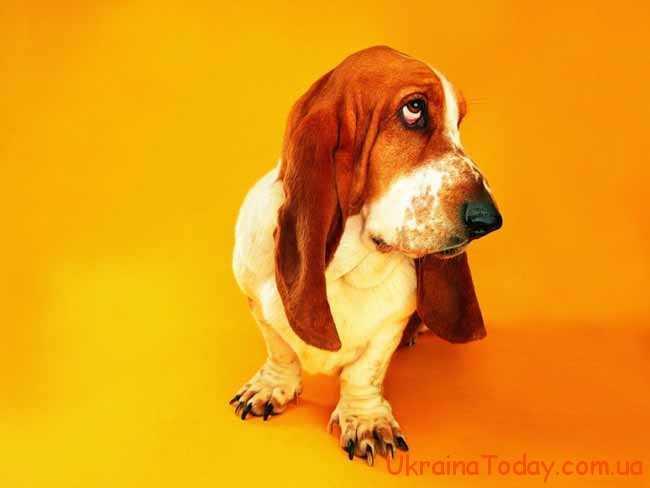собака-дружелюбна тваринка