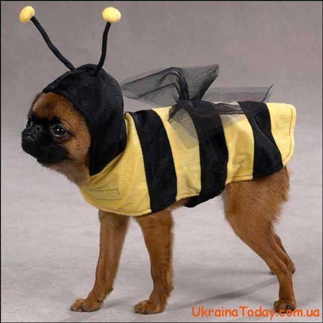 собака-бджілка