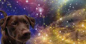 рік жовтого земляного собаки