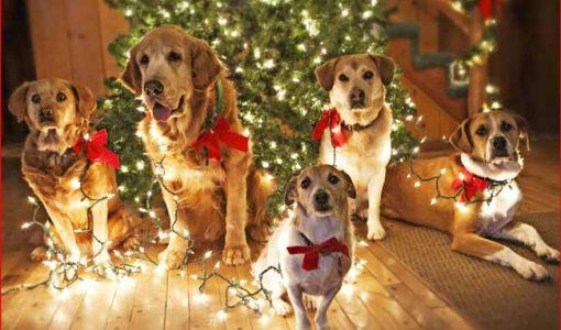 Новий рік 2018 Собаки