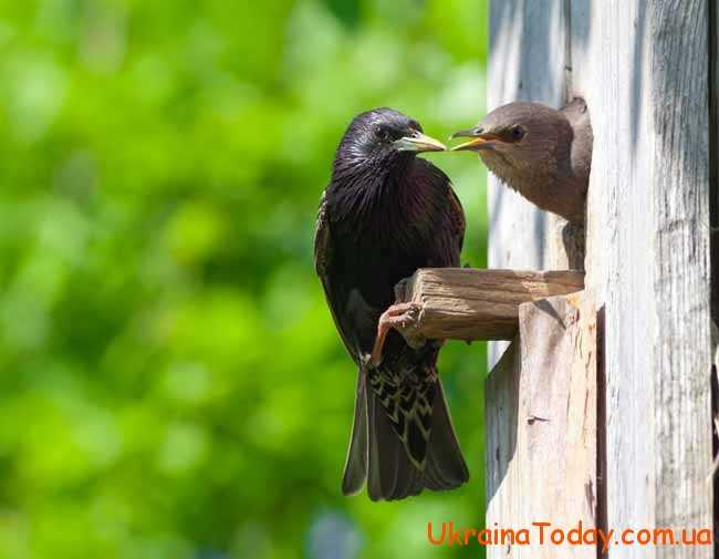 пташки навесні