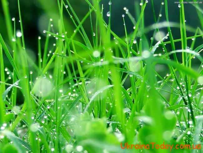зелена трава