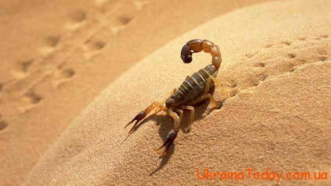 скорпіон повзе по піску