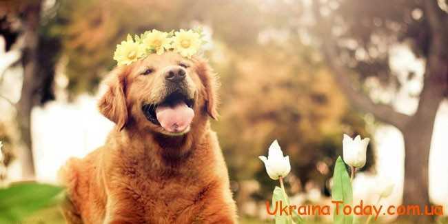 господаркою астрологічного року буде Собака