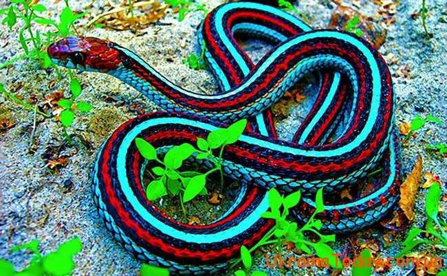 народжені у рік змії