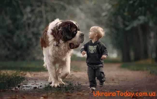 маленький хлопчик і велика собачка
