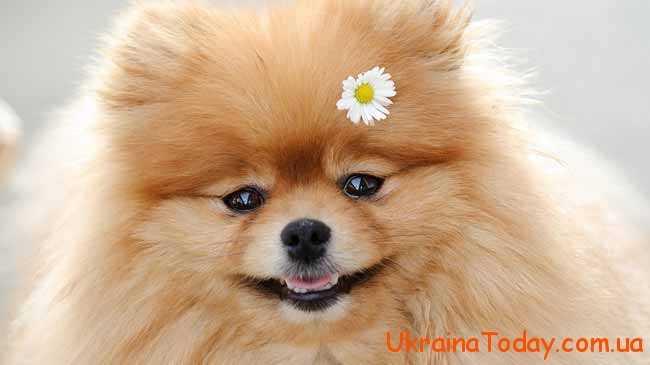 новий хазяїн року - Жовтий Земляний Собака