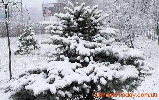 погодні умови в січні