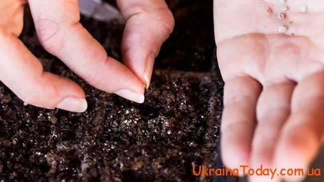 більш сприятливим для висадження рослин
