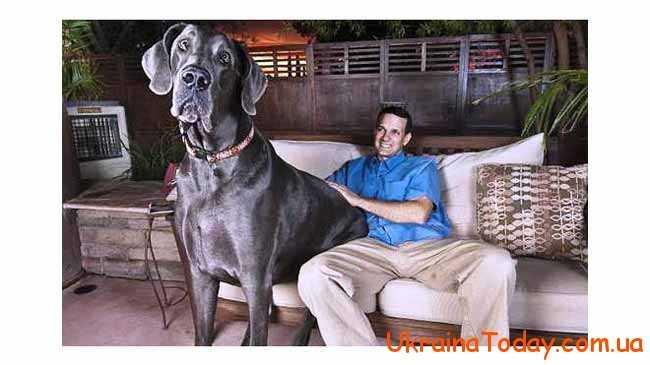 Рік, в якому хазяйнуватиме Собака