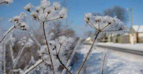 не варто хвилюватися з приводу сильних холодів
