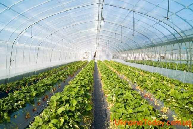 Краще зайнятись висіванням тепличних овочів