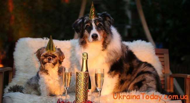 Самі новорічні привітання 2018 Собаки