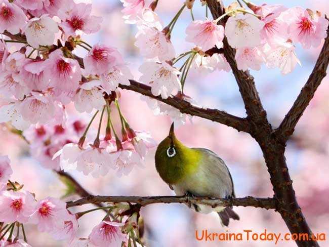 Квітень є не просто звичайним місяцем весни