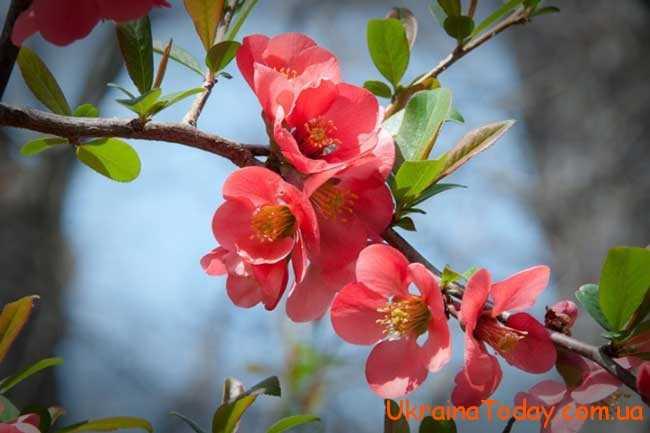 Травень – це останній місяць весни