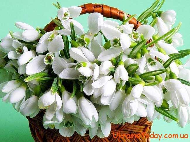 8 березня, свято всіх жінок