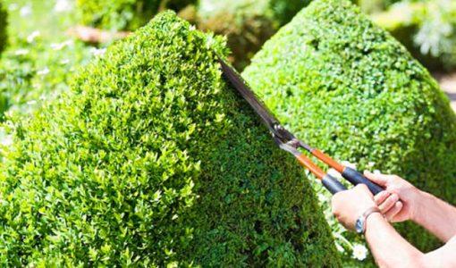 формування крон кущів та дерев