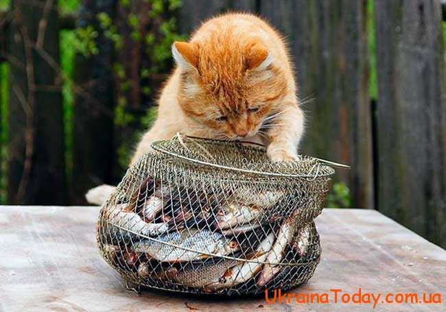 27 червня – День рибака