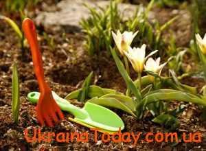сповнює кореневу систему рослин енергією