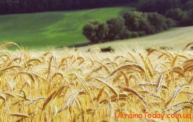 зібрати врожай зернових культур