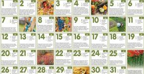 Посівний календар огородника на жовтень 2018 року