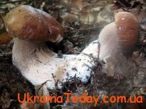 мала кількість грибів