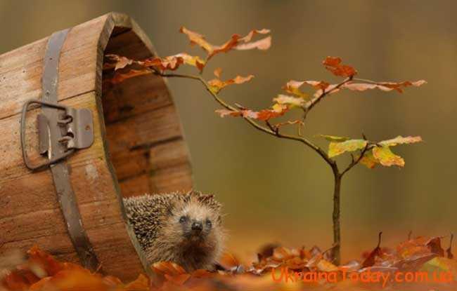 Посівний календар на листопад