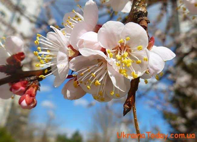 Що принесе українцям квітень