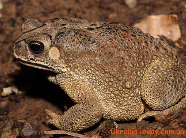По землі починають швидко стрибати жаби