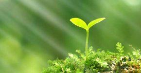 Дата проведення дня Довкілля в Україні