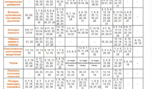 Посівний календар огородника на грудень 2018 року